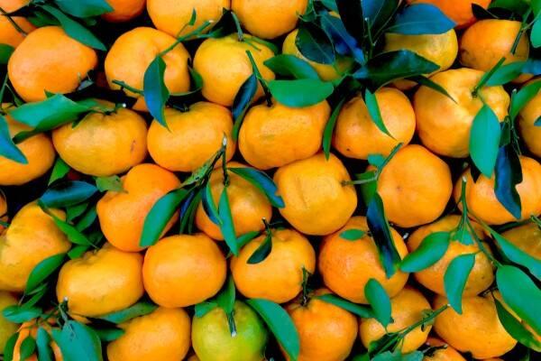Mandarijnen: Citrusfruit met pit (of zonder)